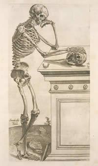 Skeletonwhy