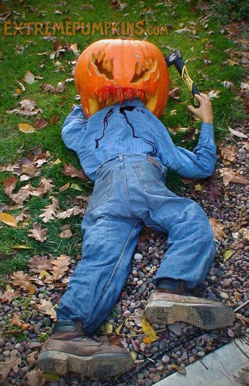 A-100-lb-pumpkin-is-large-enough-to-eat-a-man-2