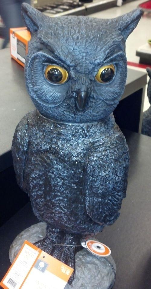 Target-owl