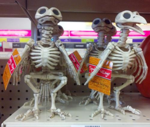 Raven-skeleton