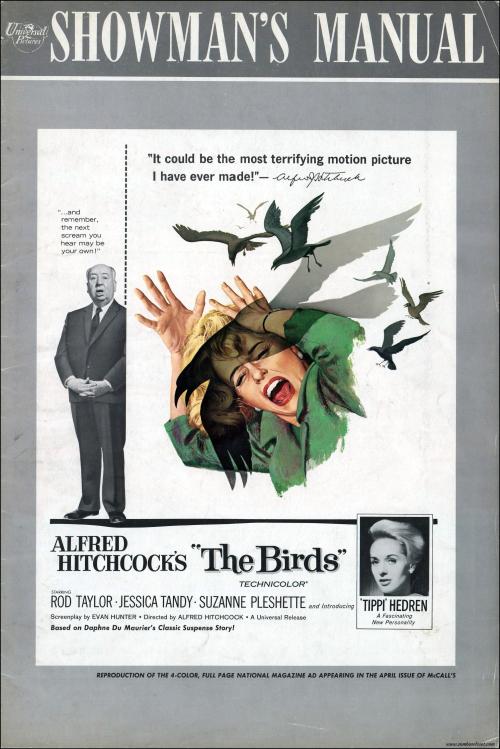 The Birds002